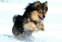 Winter and dogs / Playing in the snow or resting under a blanket - what does your dog like to do during the winter?