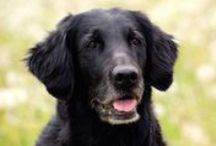 The senior dog / How is your senior dog feeling? Many senior dogs are tiered, have problems with their movements and suffers from dementia. It doesn't have to be that way. Nutrolin Senior makes wonders to the senior dog.