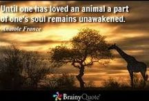 +Pets (Companion Animals) / About companion animals and #AllGodsCreatures. Information and ideas that help us be better caretakers & stewards of the animals, and the Earth...
