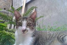 Cat Love / Kucing adalah titipan terindah dari Allah, sayangi mereka:)