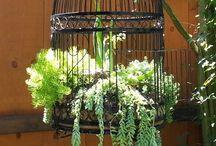 Plants/Plantas. / Plants/ Plantas