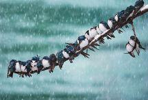 swallow...swallows...®