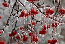 Frost (FRIO GELADO! NEVE! / Plantas, frutos árvores etc.