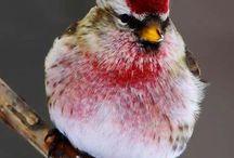 Pássaros / Pássaros e outras aves