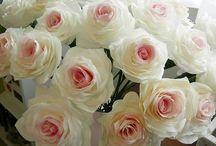 Rosas y Peónias / Beleza natural