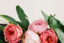 Répertoire des fleurs et plantes