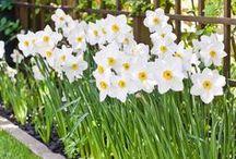 Kevätkukkia / Ideoita keväiseen kukintaan