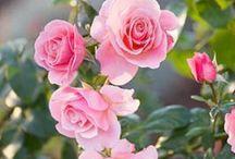 Pink / by Yolanda Hernandez