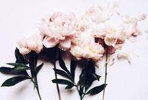 • flowers & plants •