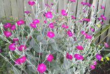 Mein Garten / Pflanzen und Tipp für Garten