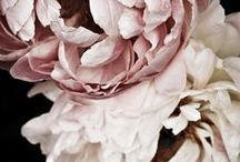 white ~ pink flowers