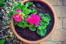 my nature story / my garden