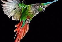 budgies, conures and other parrots / by Judy Sargis