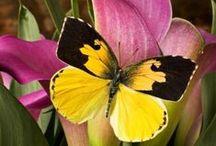 Butterflies, Dragonflies & Moths / by Katherine Blair