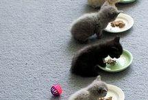 Gatos / Van katten kun je zoveel leren! Al was het maar omdat je ze nergens toe kunt dwingen. Hooguit verleiden...