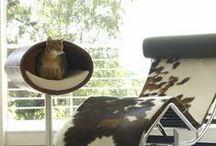Furry MOD / Modernist Pets / by North Carolina Modernist Houses
