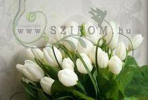 virágküldés / virágküldés Budapesten és környékén virágcsokrok, virágkosarak, ajándékok virágüzlet, webáruház www.szirom.hu