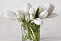 flowers / by Maggie Mireles Gtrz