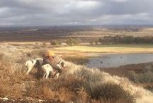 Wingshooting / Pheasant hunting in Eastern Utah is among some of the best in the world. With isolated pockets of ideal habitat and some of the finest bird dogs in the West, you're sure to have a blast.