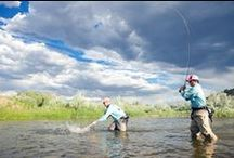 Rivers / Beautiful rivers where fish live