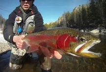 Rainbow Trout / The rainbow trout is the athlete of cold clear waters. Known for reel-screaming runs, acrobatic leaps, and an affinity for dry flies there is simply no other fish like it in the world.