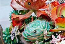 Succulent lovefest / We're into succulents. They have an ancient, clean, sometimes alien look to them. Often symmetrical, succulents are a favorite for weddings and easy windowsill containers.