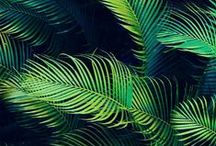 Jungle Fever / In this heat we are loving the trend for all things tropical...
