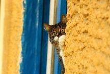 Cat Lady Wannabe / Here, kitty, kitty...