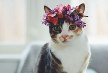 Furry friends / We heart adorable animals