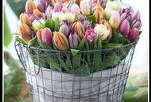 """il buongiorno """" a fiori"""""""