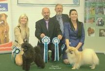 JUDGING ON DOG SHOWS / This is photo collection of Dog shows where I've judging in time of 2002 to 2015.