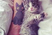 animali / gatti,cani, etccc......