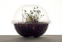 Takeout your garden / 'Take-out Your Garden' Up-cycle Campaign [ Terrarium kit ] : The purpose of this campaign is giving an opportunity to customers make their own flower pot