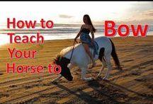 Creative horse ideas