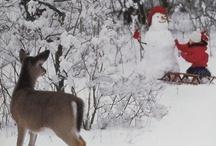 Winter Wonderland / Let it snow, let it snow, let it snow ! / by Carol Ourlian Schaedel