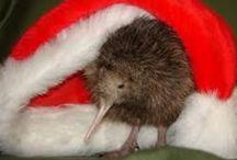 Christmas Aotearoa / Christmas in New Zealand falls in summer.