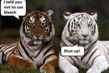 Animal Funnies / by Jan Chaput