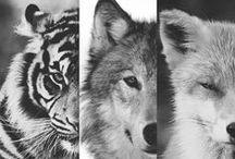 Adorable Animals ~
