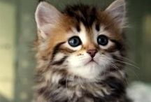 Cute Animals / Our pick of the cutest animal pics!