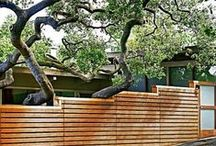 Fences / Add Privacy and Beauty to the Borders of Your Yard.