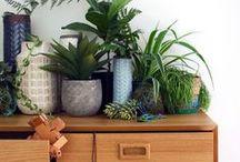 The Green House: A Botanical Interior