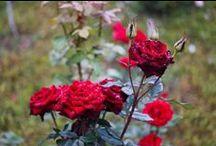 10. Flowers - GABY