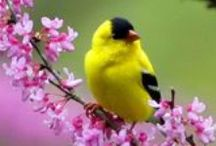 8. Birds and insects - GABY