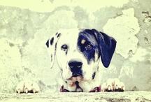 Mi Instagram / http://instagram.com/jpcomunicacion  todas las fotos realizadas por mi