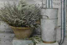 Lieflike laventel / Wie laat die laventel so lekker ruik?