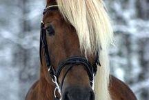 My <3 4 horses