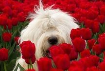 Dogs / by Susie Heidenreich