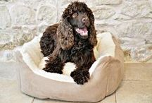 Dog beds / Luxury dog beds - wooden dog beds, donut dog beds, raised dog beds.  #doglovers #dogbed #dogs