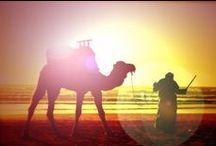 Desert  . ¸  ¸.   /\ ¸. / desert life