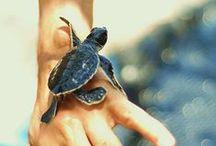 Zoology & Marine Biology / by Jessika Clarke